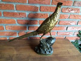 Bronzen fazant