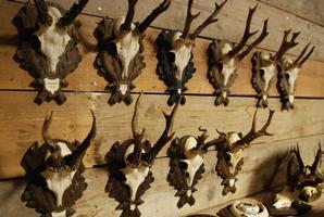 Unieke reebokgeweitjes op handgesneden houten paneeltjes