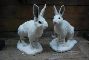 Recently unique stuffed snow hares